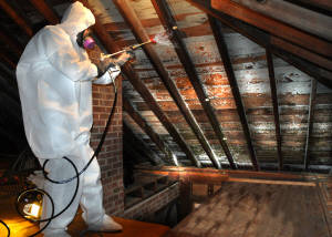 Mold Remediation Treatment And Removal A Horizon
